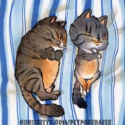 Pudge Tabby's by Marker-Guru