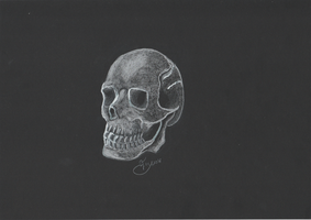 Skull on black by getupp