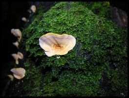 Polypore fungus by Dominion-Photography