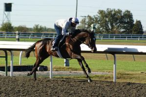 Bay Thoroughbred Gelding 004 by diamonte-stock