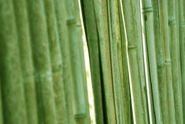 Bamboo. by Wednesday-With-You