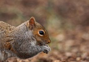 Squirrel by ScooterTheDog