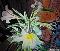 Easter Lily in Bloom by AliDee33