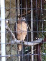 Folsom City Zoo Photo Series 8 by lilly-peacecraft