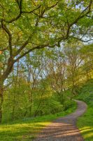 Golden Hour Forest Trail - Brecon Beacons by somadjinn