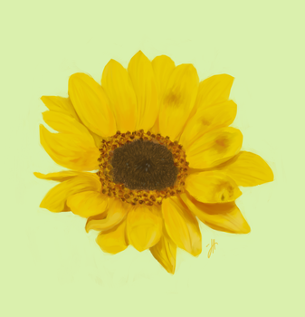 Sunflower by SoloSnail