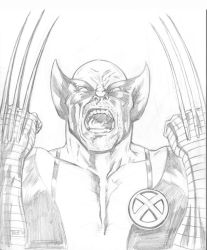 Wolverine2 by Theamat