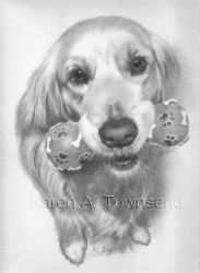 Labrador commission by Karentownsend