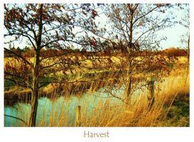 Harvest by Forarijer