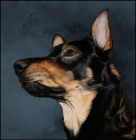 Kargo Portrait by Runestorm-kennel