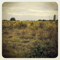 Greener Pastures I by aare
