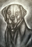 Charcoal Dog by Jufnaty