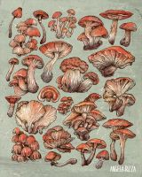 A Series of Mushrooms by AngelaRizza