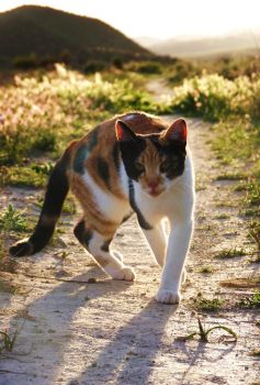 The World is my Catwalk by MiDulceLocura