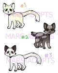 cat adopts by mars-adopts