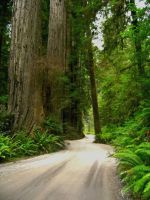 Mighty Redwood Forest by Weasel-Rider