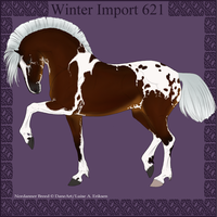 Winter Import 621 by ThatDenver