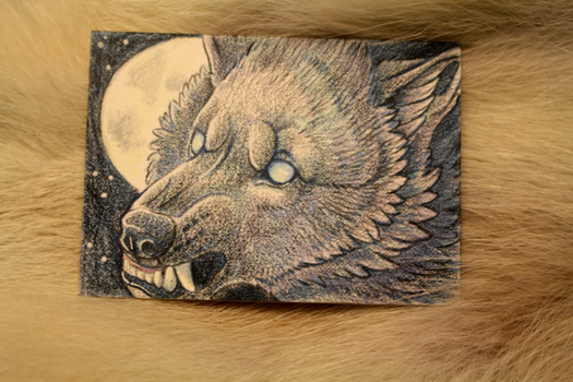 Ravenwolf snarly - ACEO by cloudstar-wolf