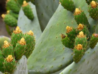 Prickly Pears by Destiny-Carter