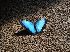 Blue butterfly by DiA-ADesign