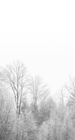 Winter white - custom box background by Martith