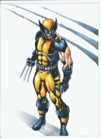 Wolverine by marcel815