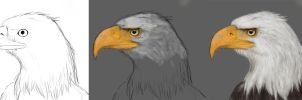 WIP - Eagle by Kaschra