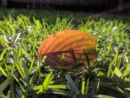 A leaf in the grass by Naturevulpex