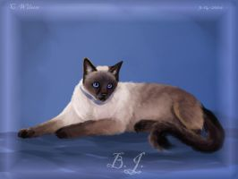 B.J. The Cat by WindSeeker