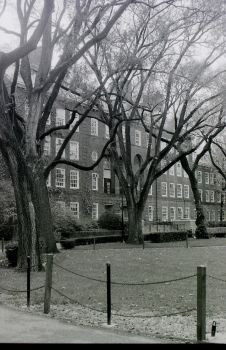 Trees In Front of Boylan Hall by lunaradiance