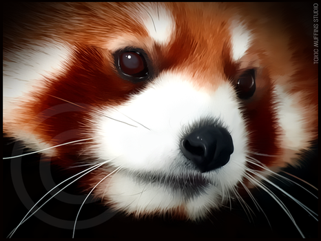 Red Panda by Toxic-Muffins-Studio