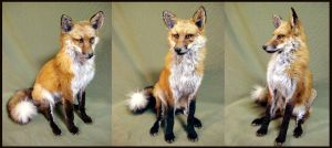 Red Fox Sitting by rcahern