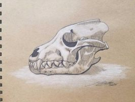 Wolf Skull Sketch by Robin305