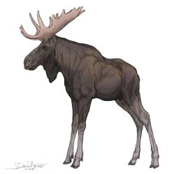 The Moose by Gredinia