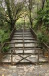 Stairs in Nature Stock by AfarStock