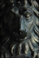 Lion by matic