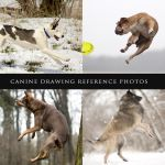 Canine Drawing Reference Photos by Lakela