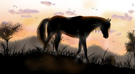 Horse by Shiro-Crow