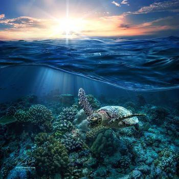 The Ocean is The Life by Vitaly-Sokol