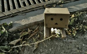 Danbo: Flower by eivven
