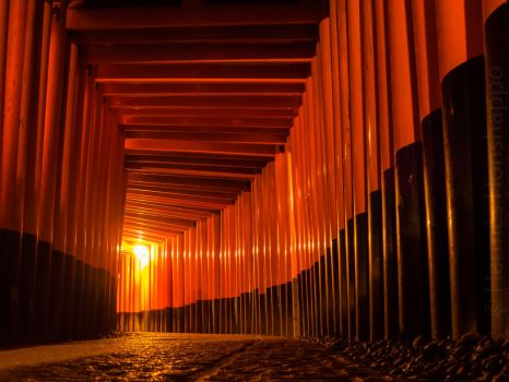 Kyoto - Fushimi Inari shrine by Hermes-Honshappo