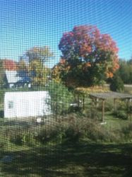 Fall View from a Window by ccrazyisme