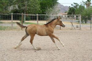 Foal 22 by Mustang4-Stock