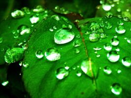 Vividly Green by littlelisa637
