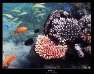 Fish and corals by MikeOSoerensen