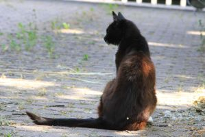 Cat Stock 30 by Malleni-Stock