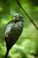 Columbus Zoo 11 by robertllynch