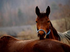 Chinrest by oldpost