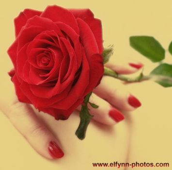 A rose is a rose is a rose.... by elfynn