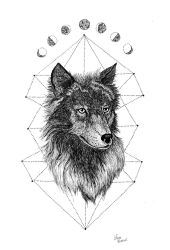 Wolf by lauramarcuet